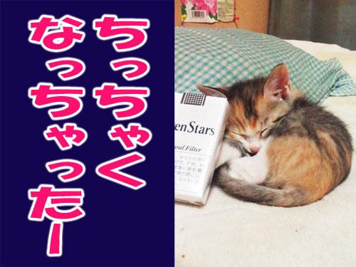 roirakugo_2_2.jpg