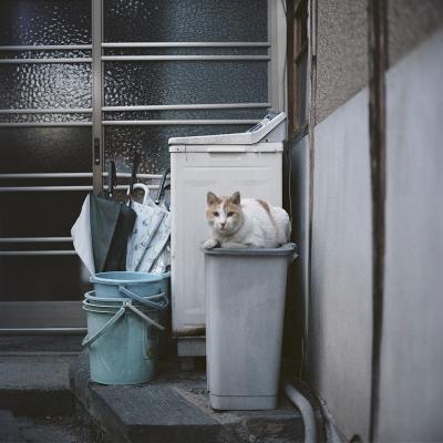 fc2ネコ