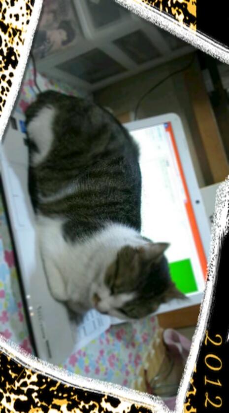 PC上のトラさん