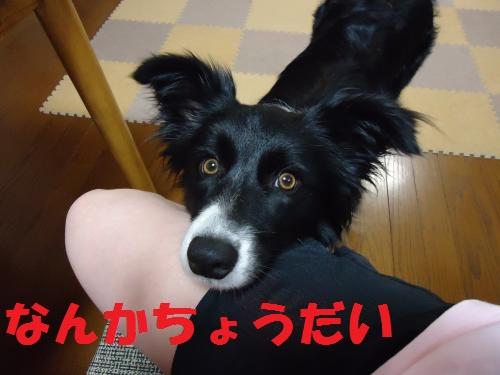 009_convert_20120510210854.jpg