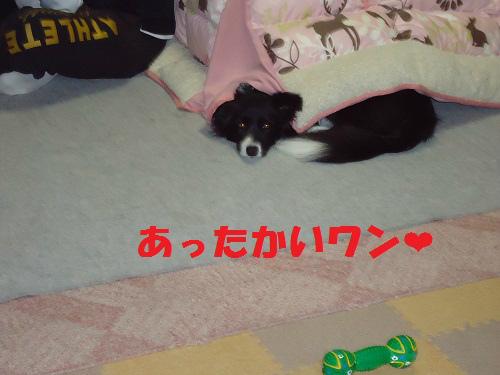 027_20121127231959.jpg