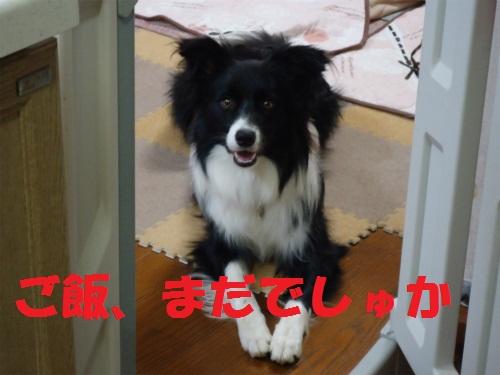076_20120813232531.jpg