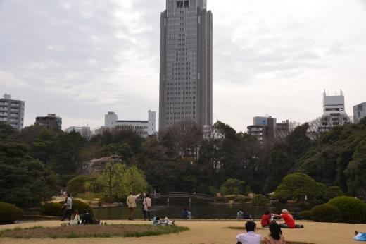 sujyukusakura8.jpg