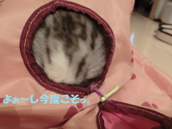 10_20120430085413.jpg