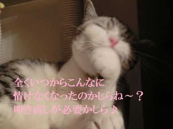 11_20120515082023.jpg