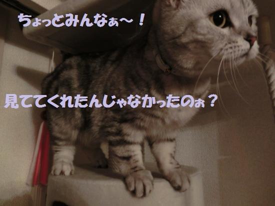 11_convert_20120508050642.jpg