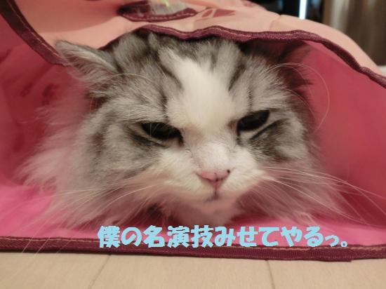 2_20120430085323.jpg