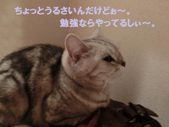 2_20120515081954.jpg