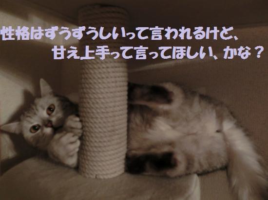 3_convert_20120508050216.jpg