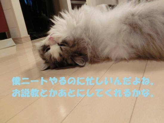 3_convert_20120515075333.jpg