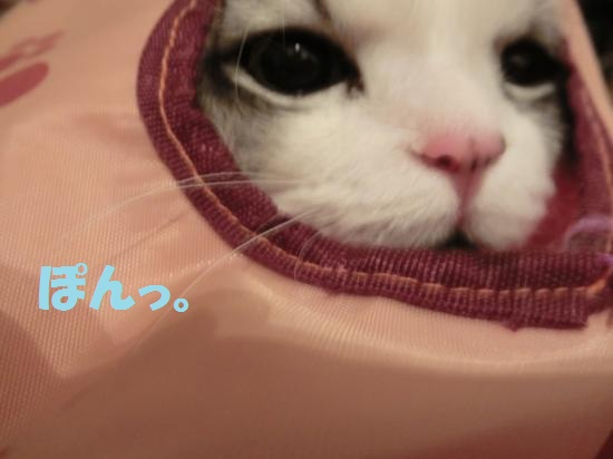 5_20120430085321.jpg