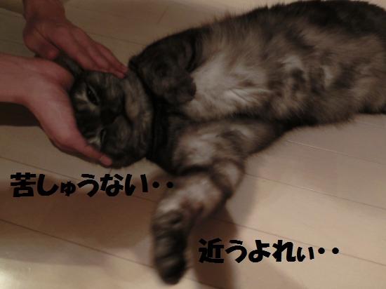 5_20120512072824.jpg