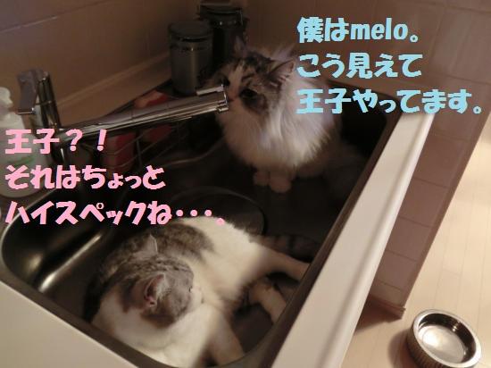 6_20120509074139.jpg