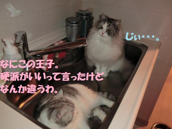 7_20120509074356.jpg