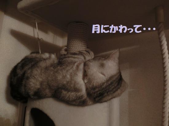 7_convert_20120508050500.jpg