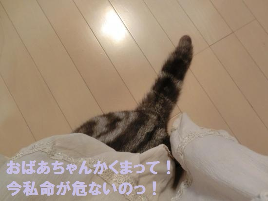9_20120515082024.jpg