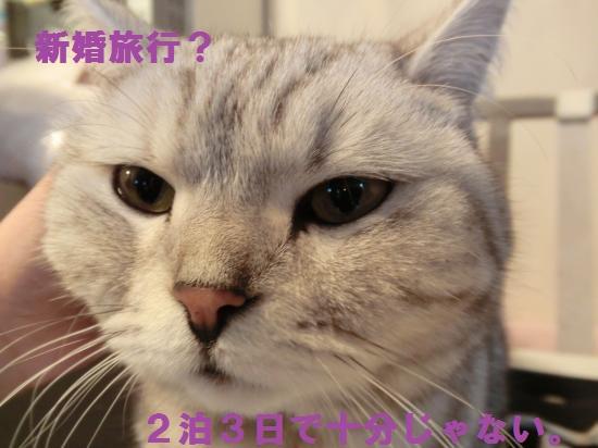 CIMG3554_convert_20120428055951.jpg