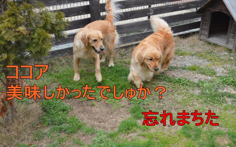 0DSC_0692_convert_20130320215202.jpg