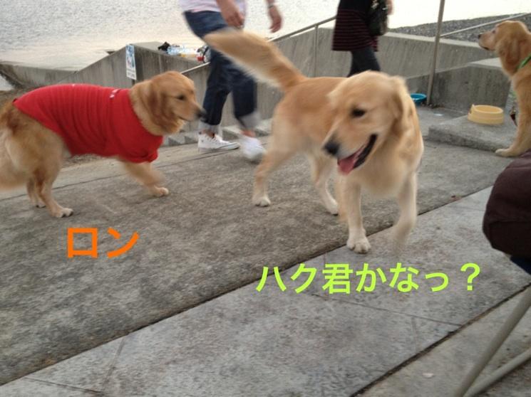 201210111932556ed.jpg