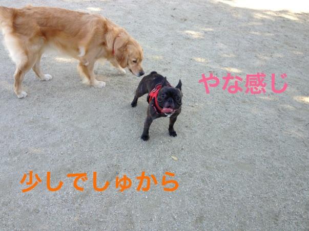 2012101222221316f.jpg