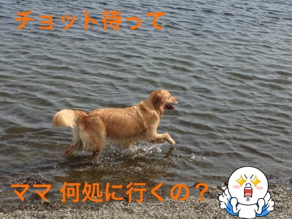 2012101319054752d.jpg