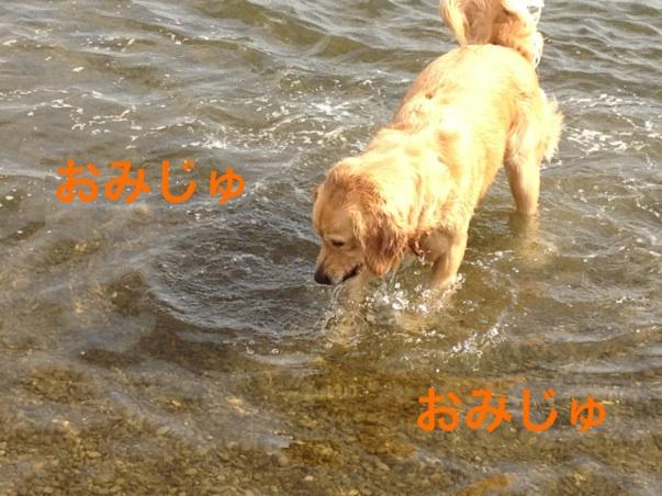 201210131952059ee.jpg