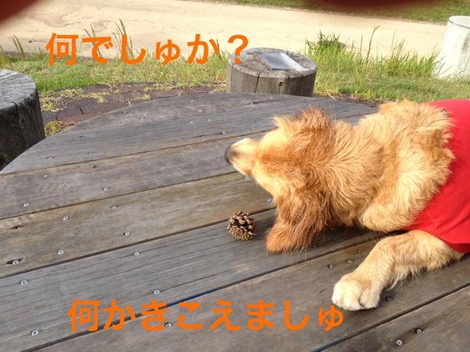 20121014191121683.jpg