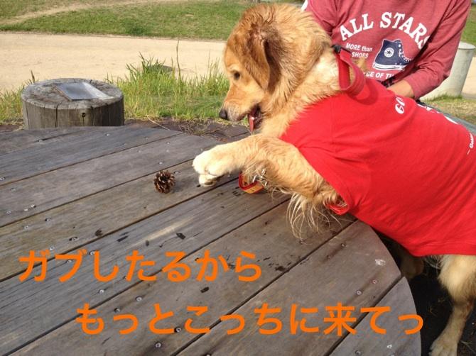 2012101419112250f.jpg