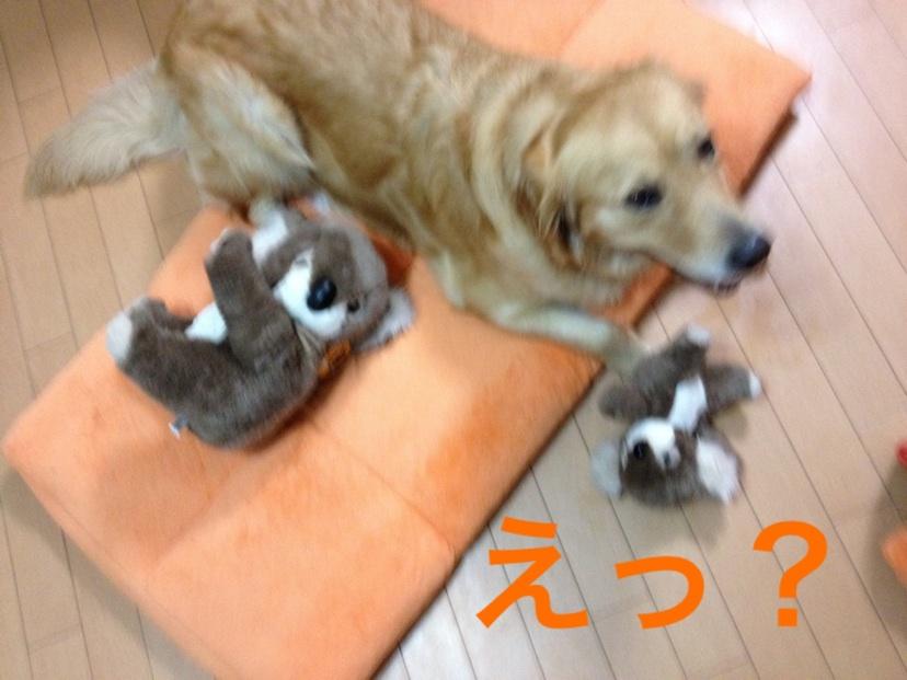 20121019224122637.jpg