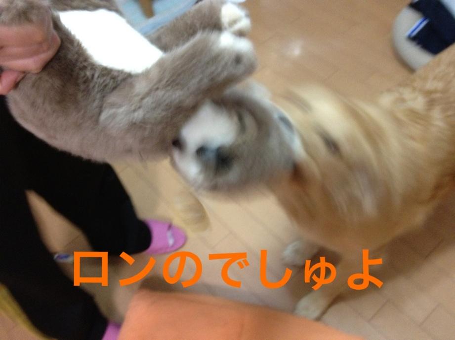 20121019224139d37.jpg