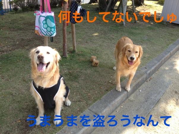 201210222153169e4.jpg
