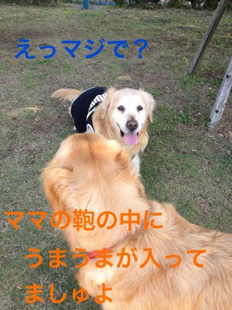 20121022215544366.jpg