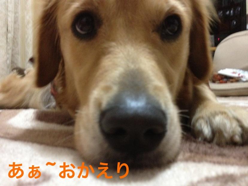 2012102722302233f.jpg