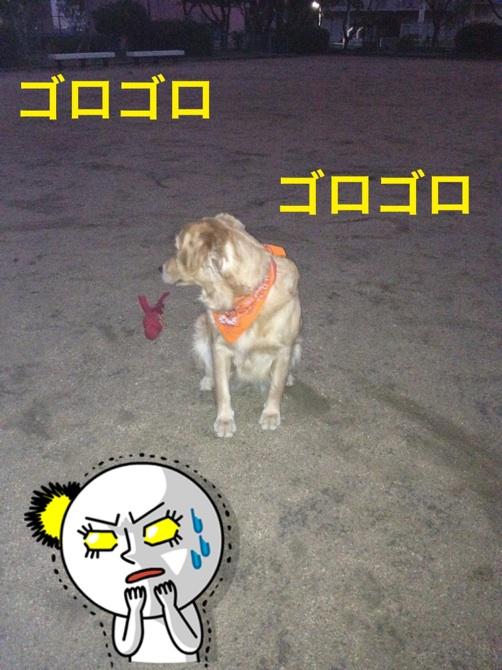 2012102920525453d.jpg