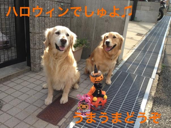 20121031211630cd4.jpg
