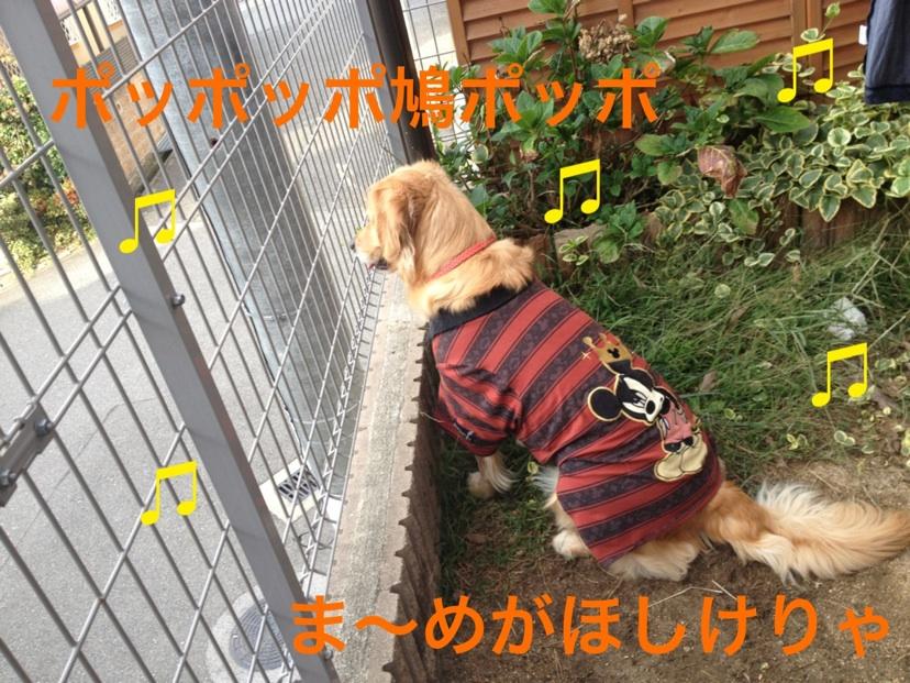 20121101210951396.jpg