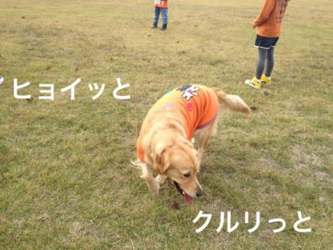 ヒョッイIMG_8399