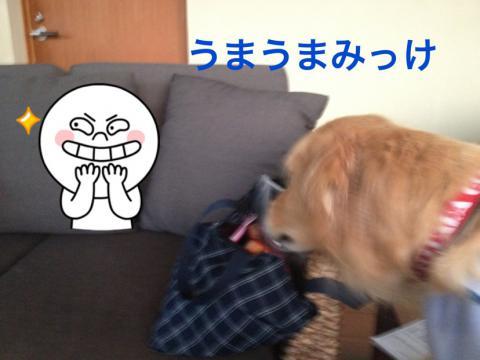 みっけIMG_8396