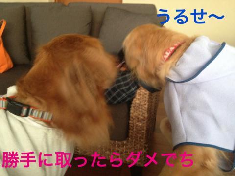 うるせーIMG_5690