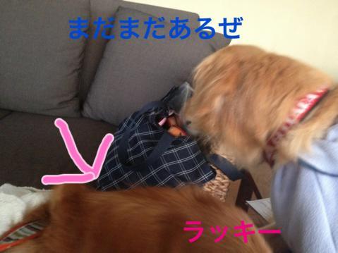 ーIMG_5873ラッキ