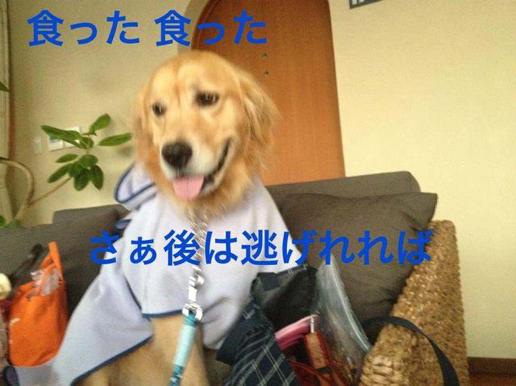 2012111022122390d.jpg