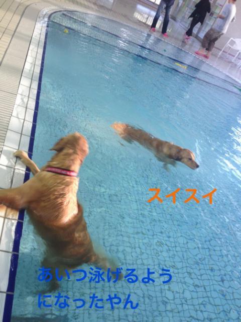泳げるIMG_9602アイツ