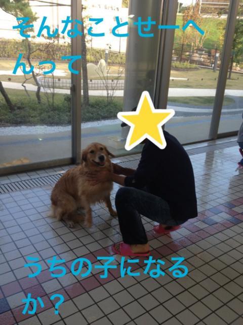 うちのこIMG_4621