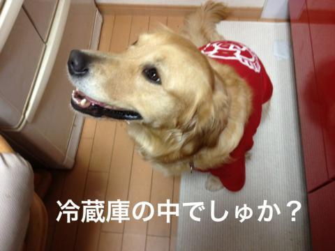 冷蔵庫IMG_0107