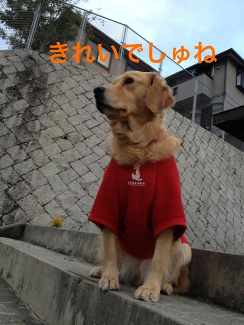 20121114224512f80.jpg
