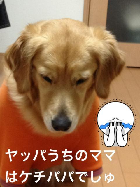 ケチババIMG_2250