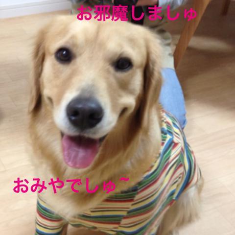 お邪魔IMG_6488
