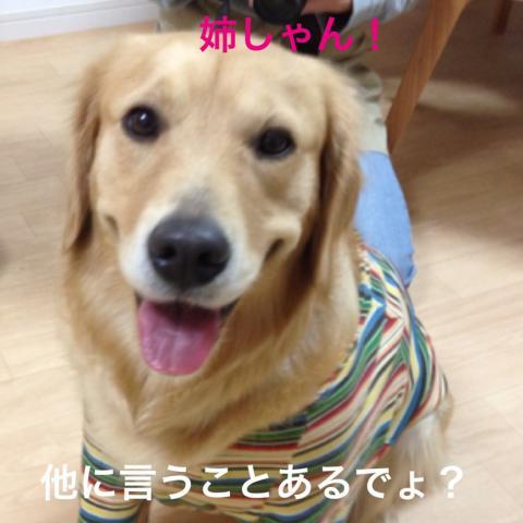 ほかIMG_4981