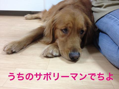 さぼりIMG_0510