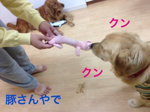 豚IMG_3096